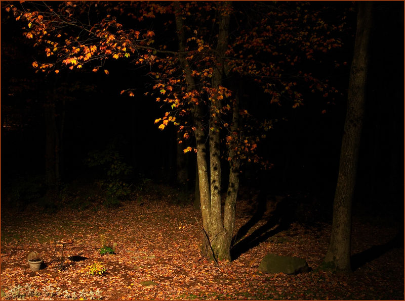 fall-night-oasis.jpg